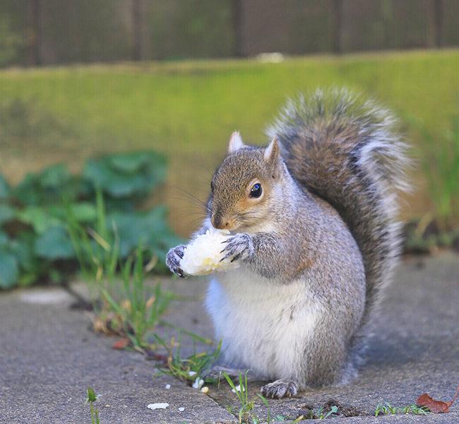 Removing Squirrels